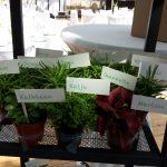 für jeden eine Minipflanze